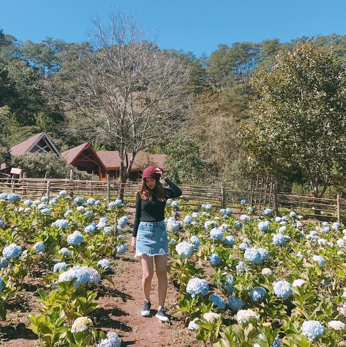 Cánh đồng hoa cẩm tú cầu ở làng Cù Lần - Ảnh Truonganct94