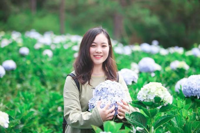 Cánh đồng hoa cẩm tú cầu ở trong thung lũng Tình yêu Đà Lạt