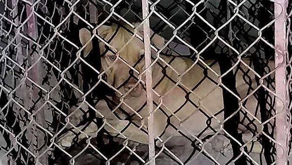Con chó cắn nữ lao công bị nhốt lại