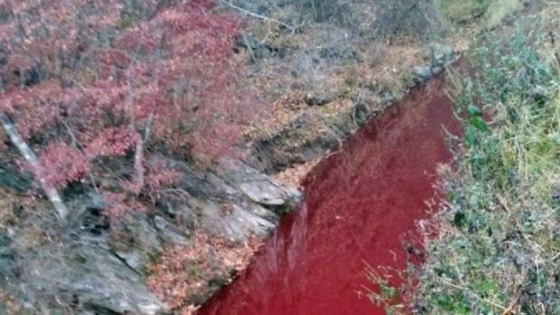 Nước sông đỏ quạch do nhiễm máu lợn. Ảnh: Yeoncheon Imjin river civic network