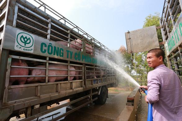 Yêu cầu doanh nghiệp giảm giá thịt heo xuống dưới 75.000 đồng/kg - Ảnh 1.